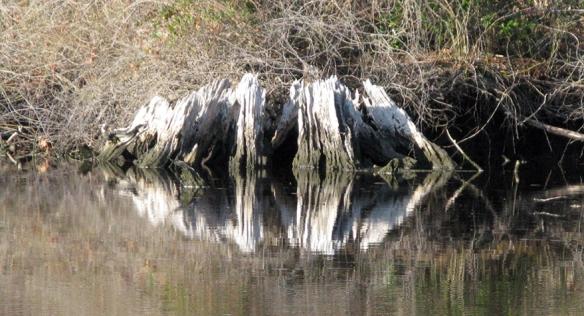 12-1 Alligator Pungo Canal kaleidoscope 2